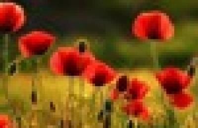Konkurs na najpiękniejszy bukiet z polnych kwiatów